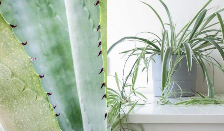 Beste Planten Voor In De Badkamer Grando Keukens Bad